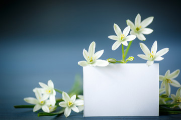 beautiful white flowers with a blank