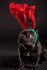 french bulldog wearing antler