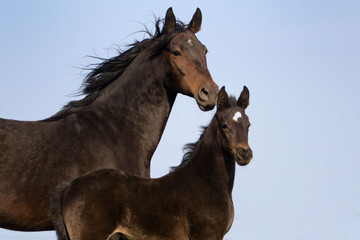 Mare and her foal in the farm against blue sky