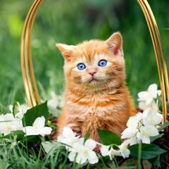 Cute little kitten sitting in a basket with flowers