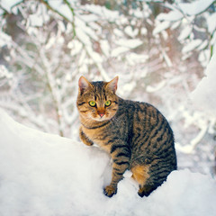 Cute cat walking in the snowy forest
