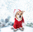 canvas print picture - hund im winter
