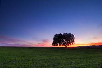 Árvore solitária na planície alentejana ao cair da noite