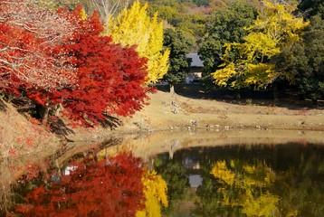 紅葉の大仏池