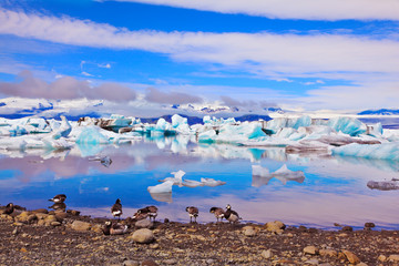 Ice floes floating in the ocean, and polar birds