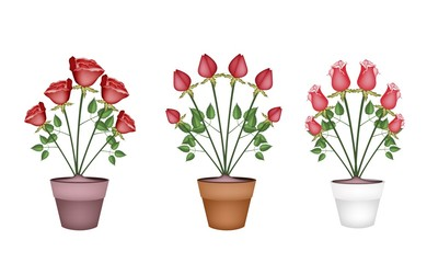 Red Roses in Tree Ceramic Flower Pots
