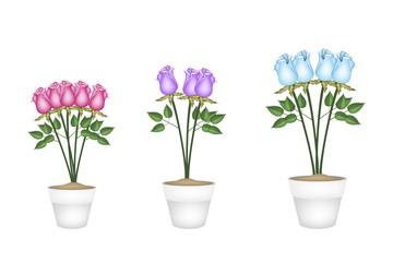 Beautiful Roses in Tree Ceramic Flower Pots