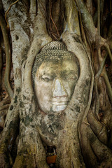 Ancient Buddha Entwined Within Tree Roots in Thailand