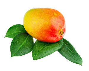 Fresh mango fruit with green leaves isolated on white background