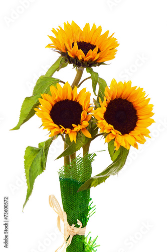 Foto op Canvas Zonnebloem Still Life with Sunflowers Isolated on White Background.