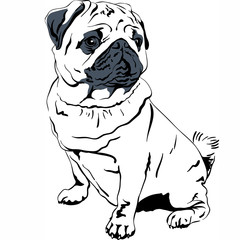 Vector sketch dog Pug breed hand drawing vector