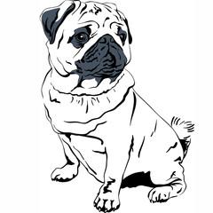 Vector sketch dog Pug breed hand drawing vector