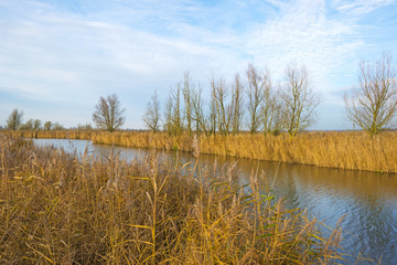 The shore of a river with reed in autumn