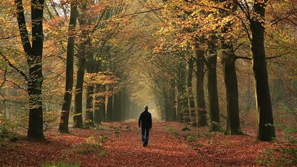 Man walking in a lane of trees on an autumn day.