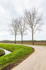 Three bare trees in a roadside