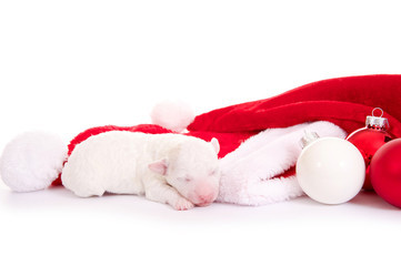 Schlafenden Hundebaby mit Nikolausmütze