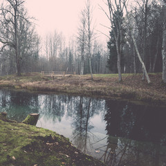 clear morning by small lake with reflections. Vintage.