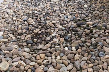 pebble stone texture background