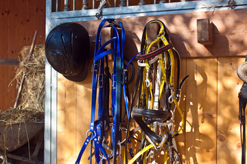 bridles and riding hat at the horse box