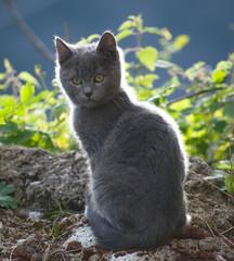 gatto 5