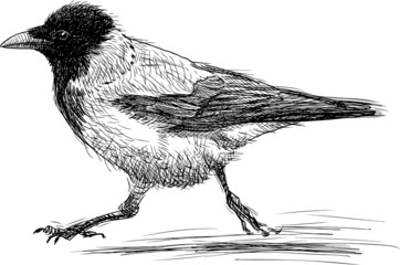 running crow