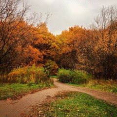 autumn trees in park with path