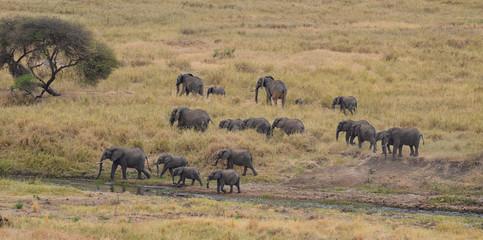 Herd of Elephants 3