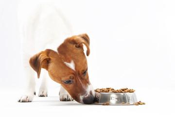 Sucha karma, zdrowa dieta psa