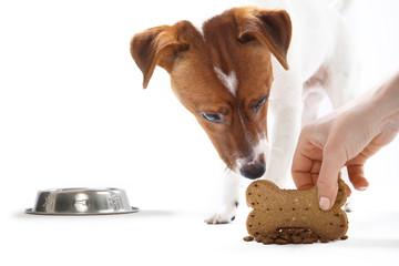Przysmak witaminowy, zdrowa dieta psa