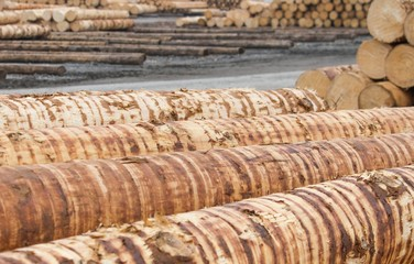 Rohholz vor der Verarbeitung im Sägewerk
