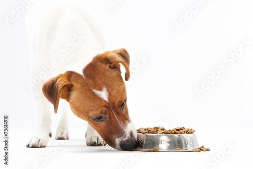 Fototapeta Sucha karma, zdrowa dieta psa