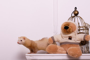 ferret and bear