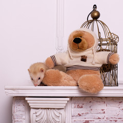 ferret and bear