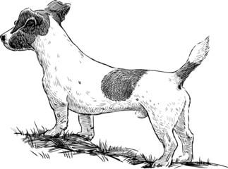 observing dog