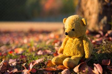 秋の森と熊の縫い包み