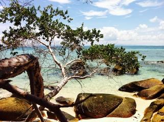 tropical paradise beach, sea sand sun