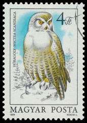 Stamp shows image of a Snowy Owl