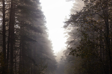 Morning in forest