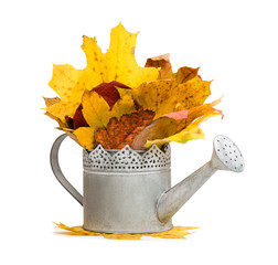 watering can full of autumn leaves isolated