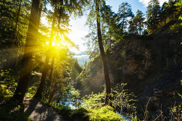 Green forest with sunrays