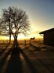 a horse in the morning