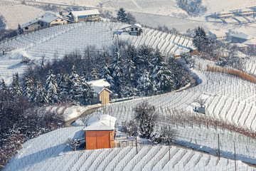 Snowy vineyards in Piedmont, Italy.