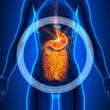 ������, ������: Guts Female Organs Human Anatomy