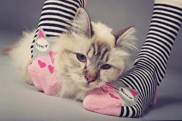 chat dans chaussettes femme