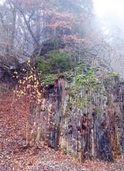 Felswand im Nebel im Steinbruch am Bromberg