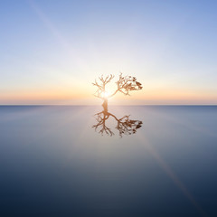 Conceptual image of single tree in still water with sunburst