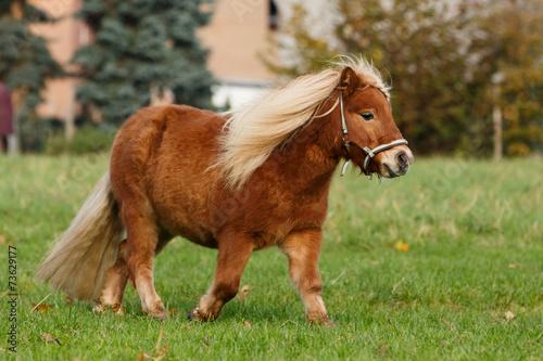 Fotobehang Ree Molliges Pony trabt