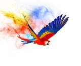 Fototapety Colourful flying parrot isolated on white