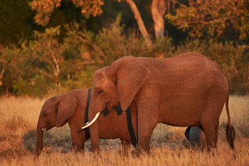 Mom and cub elephant