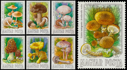 Set of stamps printed in Hungary shows edible mushrooms